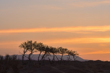 silhouettes of trees on hill Stock Photo