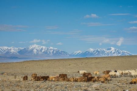 herd of herbivorous animals in prairie