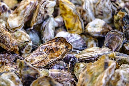 Heap of fresh oysters on the market. Close up view. 版權商用圖片