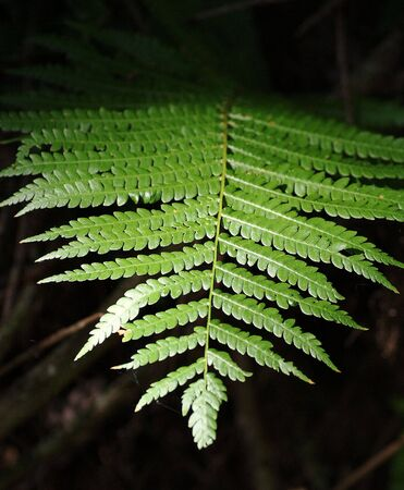 shadowed: Fern leaf Stock Photo