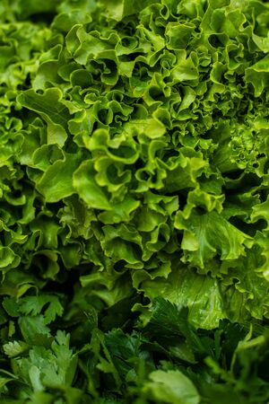 Green lettuce and parsley. Grass background: parsley and fresh salad