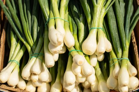 Close up picture with a lot of green onions are on each other lie in the big box outside