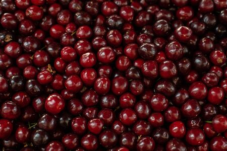 Close upu picture of a lot of burgundy, red cherries sold on the market. Fruit market 版權商用圖片 - 150419268