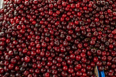 Close up of large collection of fresh red cherries. Ripe cherries background