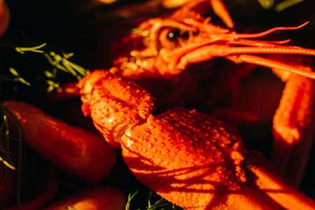 Large steamed cancer of red-orange color in sunlight
