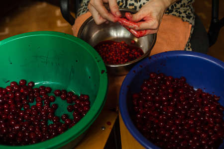 Woman cleans cherries from seeds before cooking