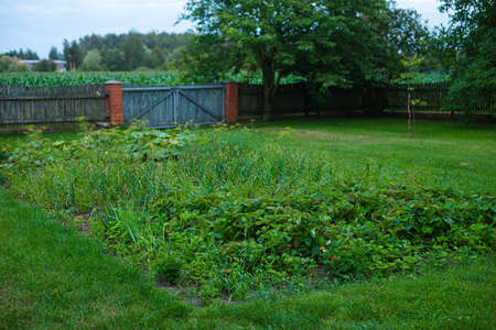 Green countryside garden.