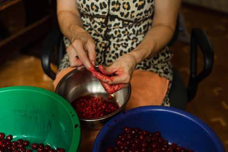Unrecognizable woman removing cherry pits by hands. Stok Fotoğraf