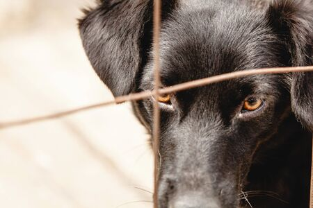 muzzle of a black dog close up behind bars in a shelter outdoor Archivio Fotografico