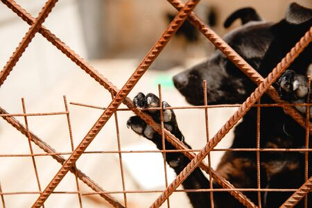 dog of unknown breed behind bars in a shelter outdoor