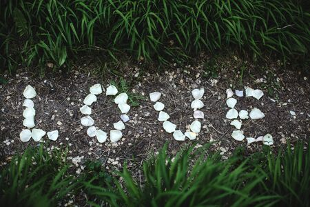 inscription love of white rose petals on the path Reklamní fotografie
