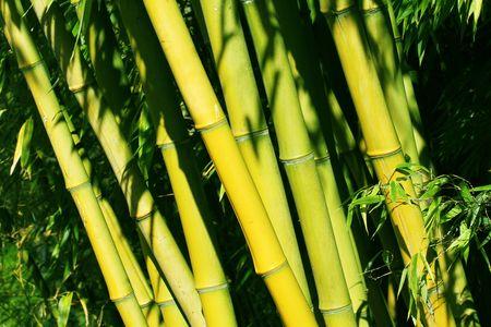 bamboo 版權商用圖片