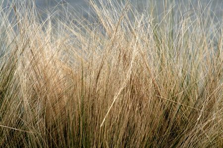 to sway: winter grass