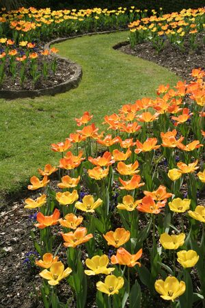 tulip garden Stock Photo - 391580