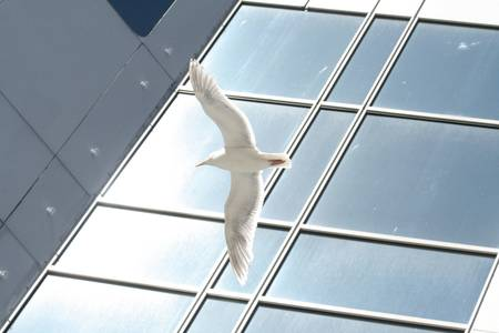 sea gull flying outside of a office building