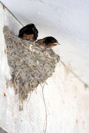 nestling: nestling Stock Photo