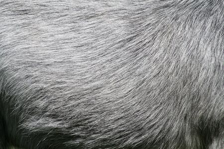 horse skin photo