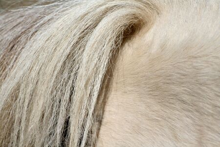 horse tail photo
