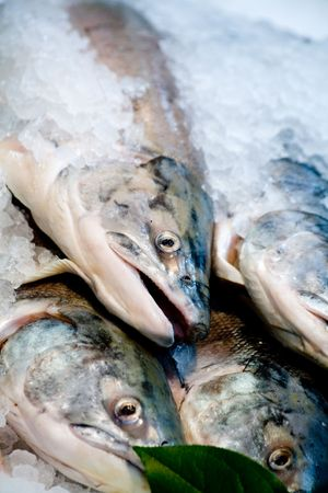 Salmon close up shot in a market photo