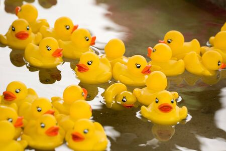 rubber ducky: Rubber Duck in a pool Stock Photo