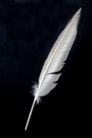 a white Feather, Quill Pen