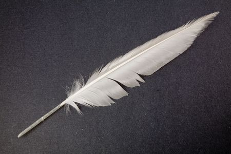 plume blanche: blanc Feather, Quill Pen Banque d'images