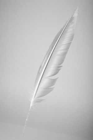 Feather in gray tone, Quill Pen