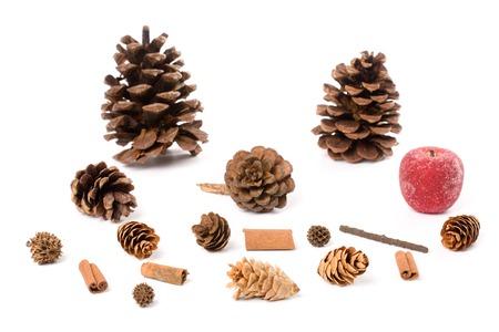 pine cone: Pigna con sfondo bianco
