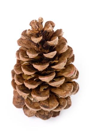 pine cone: Pine Cone with white background