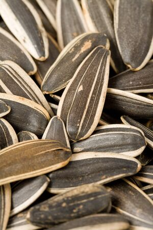 sunflower seeds: Sunflower Seed close up shot Stock Photo