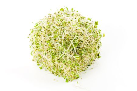 Alfalfa Sprout with white background Фото со стока