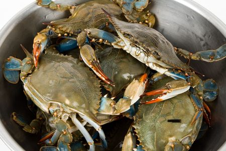 Blue Crab close up shot photo