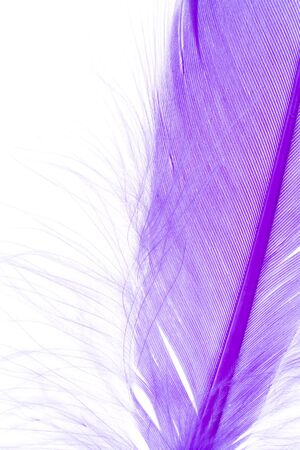 Blue Feather with white background