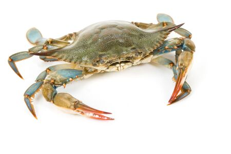 crab: Blue Crab with white background