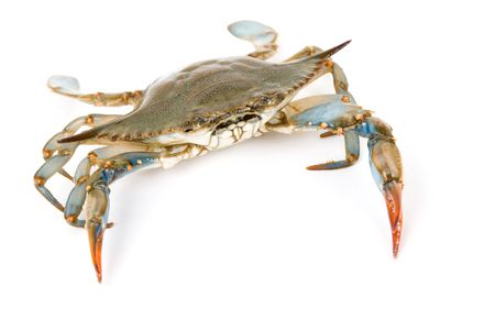 Blue Crab with white background