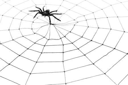 Spider Web pour une utilisation d'arrière-plan Banque d'images - 5650835
