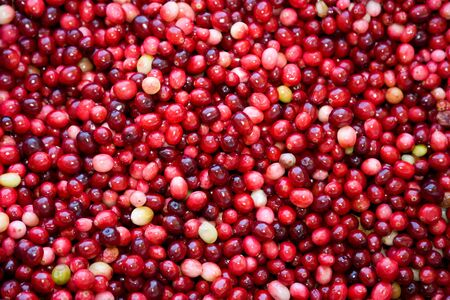 Red Cranberry for background use