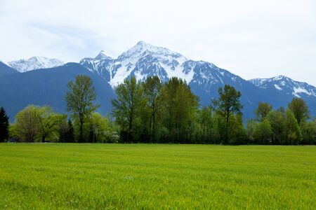 Mountain and Grass for background