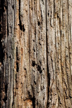 Weathered Wood Textured for background Stok Fotoğraf - 6883897