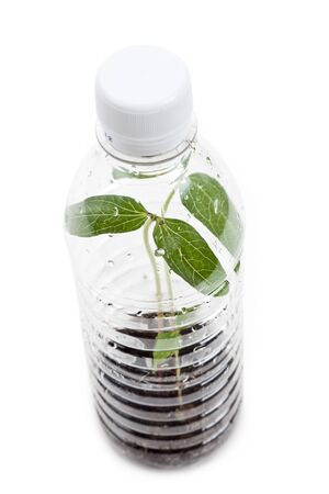 plastic bottle and Sprout with white background photo