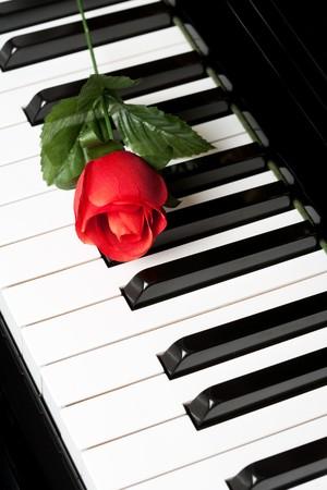 Piano Key and rose close up shot photo