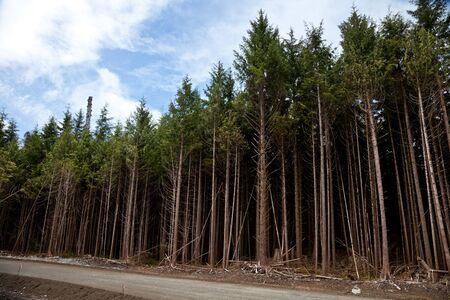 森林伐、環境損傷の概念