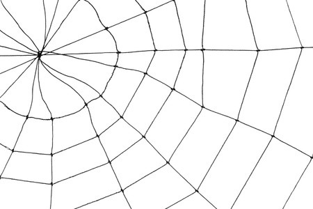 Spider Web for background use Banque d'images - 7781320