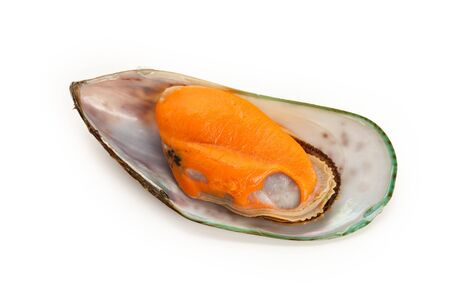 Raw Mussel with white background