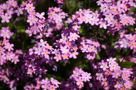 Pink flower for background use Reklamní fotografie