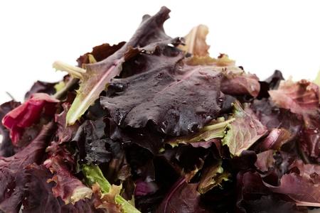 lettuces: red leaf lettuces for background