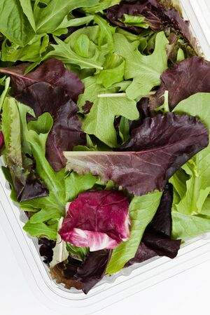 Spinach, red leaf lettuces, mizuna for background