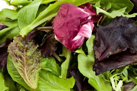 lettuces: Spinach, red leaf lettuces, mizuna for background