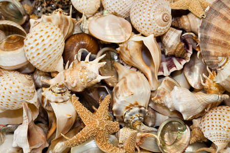 Seashells Collection for background use