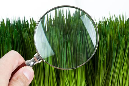 magnifying glass and green grass close up photo